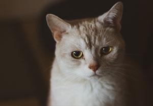 SUNDAYWALK and my CAT - ミッチェル Mitchell